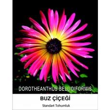 Buz Çiçeği Tohumu 2- MESENBRYANTHEMUM ALBATUM (~ Takribi 40 Tohum)