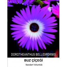 Buz Çiçeği Tohumu 1- MESENBRYANTHEMUM ALBATUM (~ Takribi 40 Tohum)