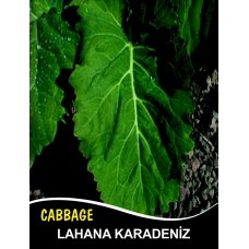 Lahana Tohumu Karadere (Yaprak); - 500g